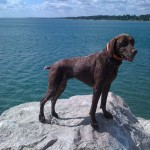 """Reilly"" dog standing on a rock"