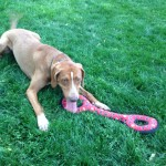 """Dog """"Hope"""" with rubber chew toy"""