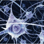 Neurons magnified
